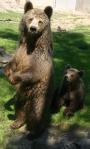 Förvånad björn