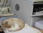 Kosmos sover på skrivbordet